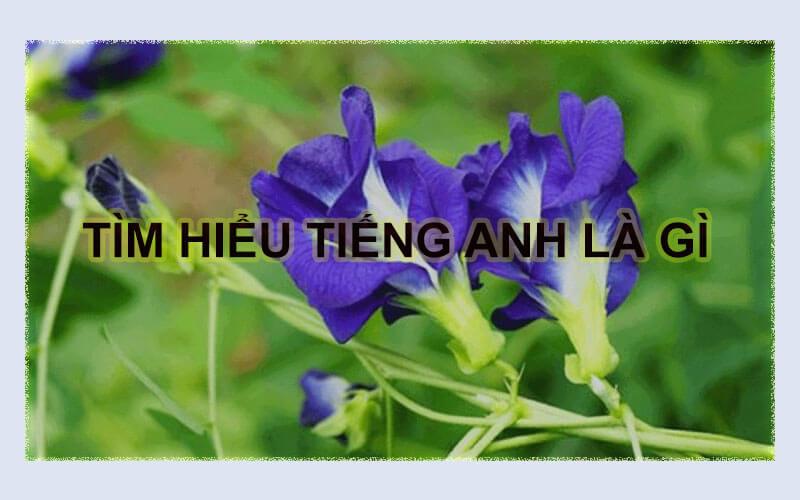 Tim Hieu Tieng Anh La Gi